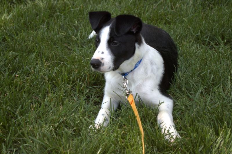 Colin at 12 weeks